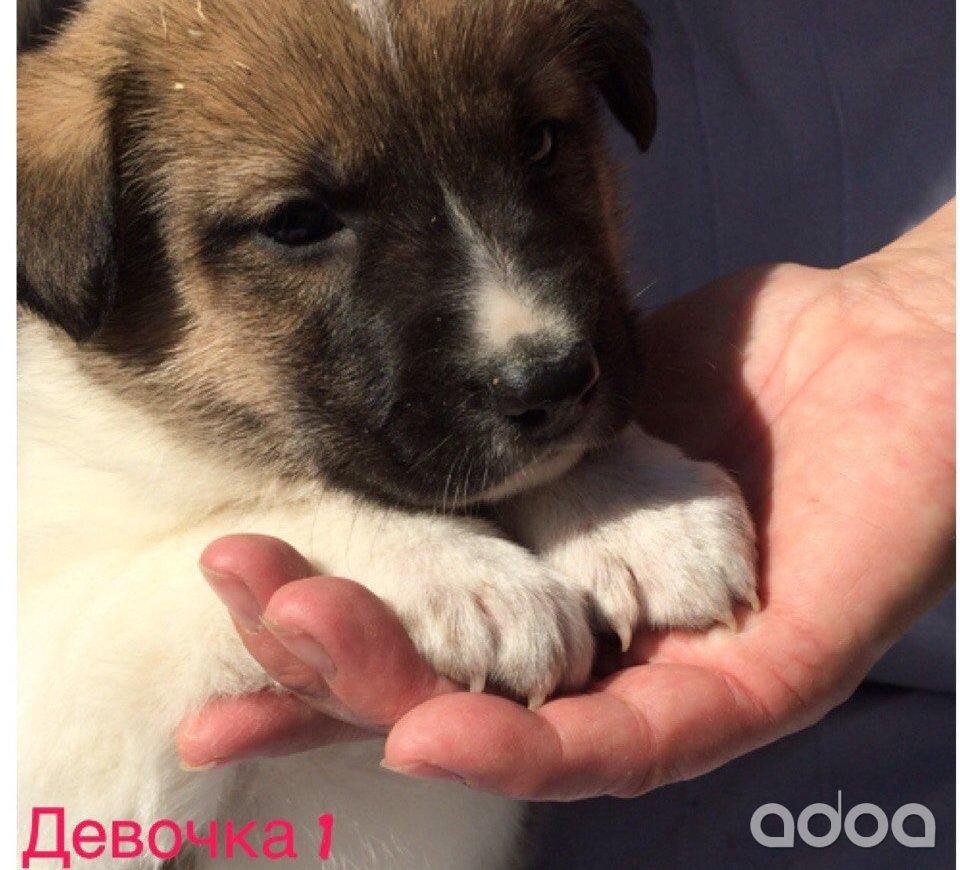 Отдам собаку щенка в дар в санктпетербурге